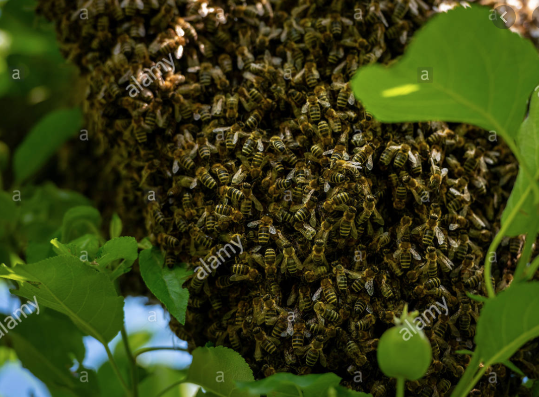Bee Relocation Services