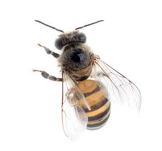 Bee Removal Experts
